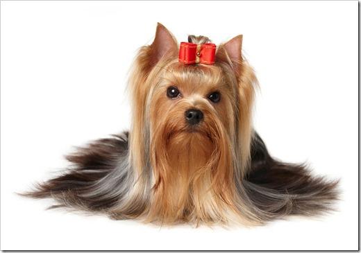 Каких собак отводят к грумерам?