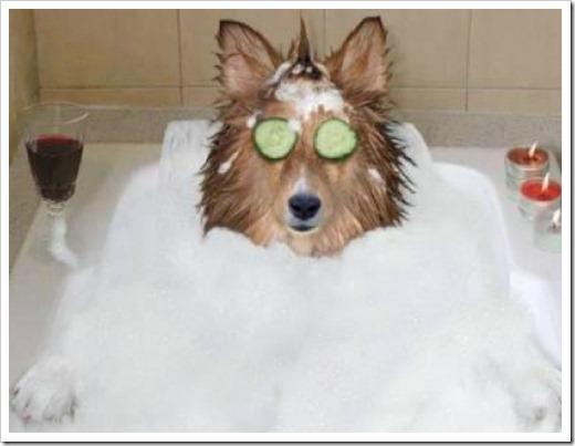 Уход за собакой: шерсти большее внимание